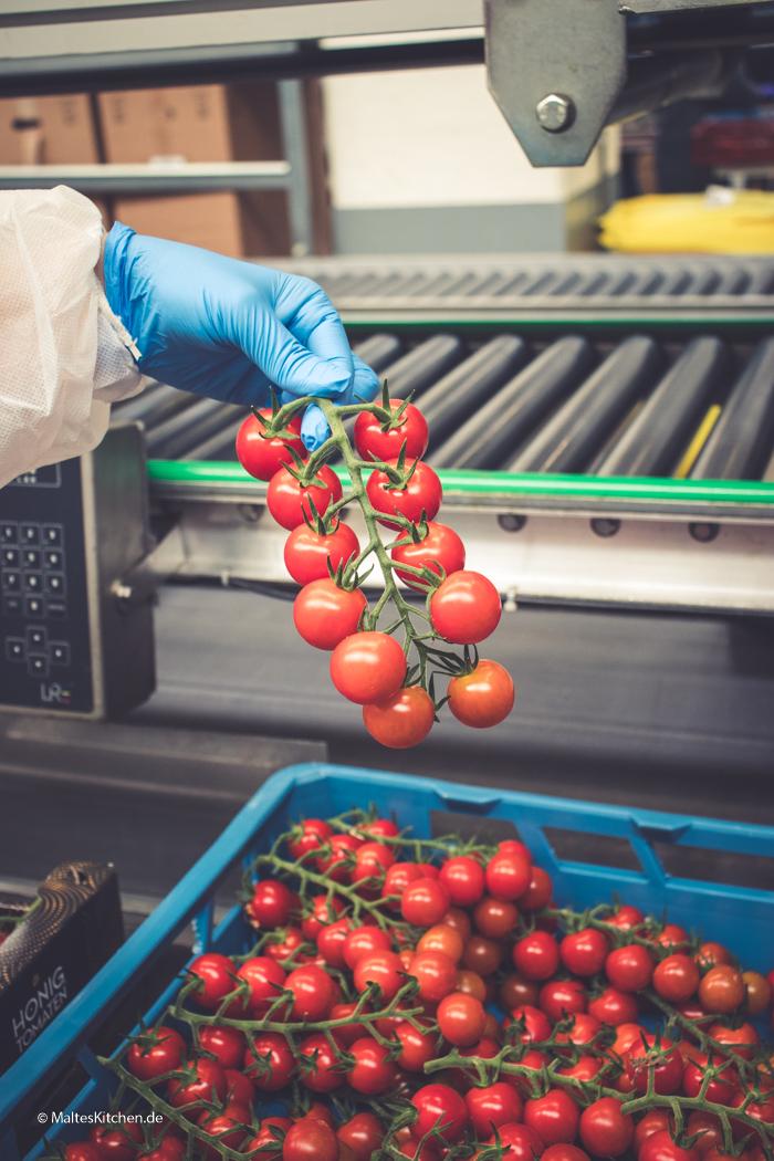 Die Honigtomaten werden per Hand sortiert und begutachtet